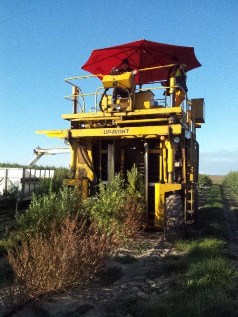 harvest 2012 10